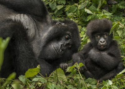 8_one_and_only_gorillas_nest_ruanda_5